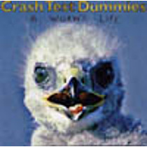 Crash Test Dummies: A Worm's Life